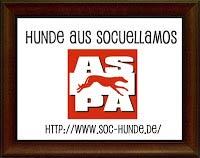 Hunde Aus Socuellamos