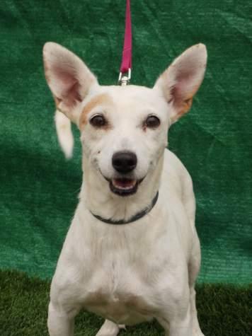 Zara perro adoptado bamb difunde - Zara ciudad real ...